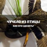 как сделать чучело из птицы