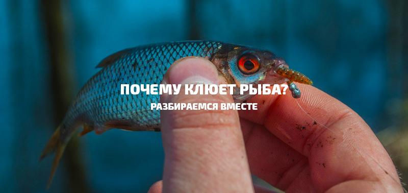 почему-клюет-рыба