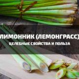 Лимонник: целебные свойства и польза